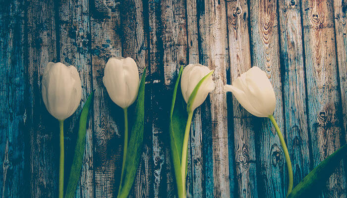 primavera-ingles