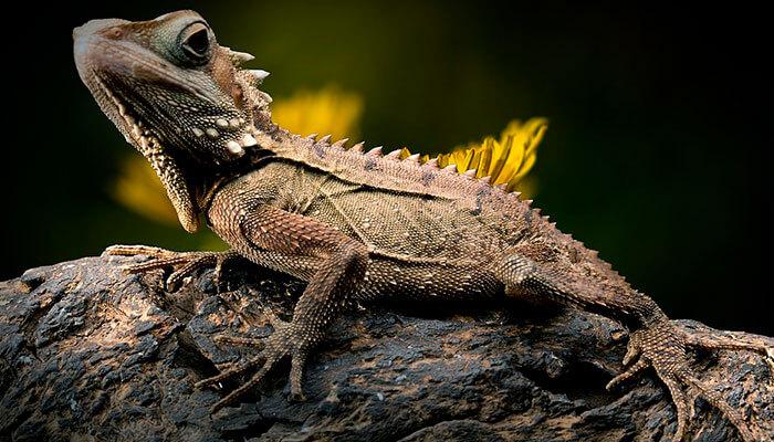 reptiles-en-ingles